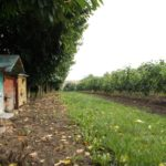 winnica-knapow-cmielow-pszczoly-ule-pracowite-pszczolki-sad-drzewa-owocowe-winorosle