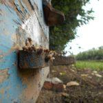 winnica-knapow-cmielow-pszczoly-ule-winorosla-sad-czeresniowy-drzewka-owocowe